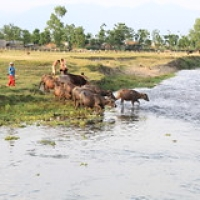 "Village Tharu • <a style=""font-size:0.8em;"" href=""http://www.flickr.com/photos/22252278@N05/21275141693/"" target=""_blank"">View on Flickr</a>"