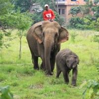 "Les éléphants de Sapana • <a style=""font-size:0.8em;"" href=""http://www.flickr.com/photos/22252278@N05/21870149546/"" target=""_blank"">View on Flickr</a>"