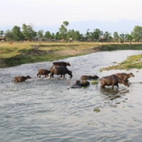 "Village Tharu • <a style=""font-size:0.8em;"" href=""http://www.flickr.com/photos/22252278@N05/21273506624/"" target=""_blank"">View on Flickr</a>"
