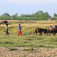 "Village Tharu • <a style=""font-size:0.8em;"" href=""http://www.flickr.com/photos/22252278@N05/21905897931/"" target=""_blank"">View on Flickr</a>"