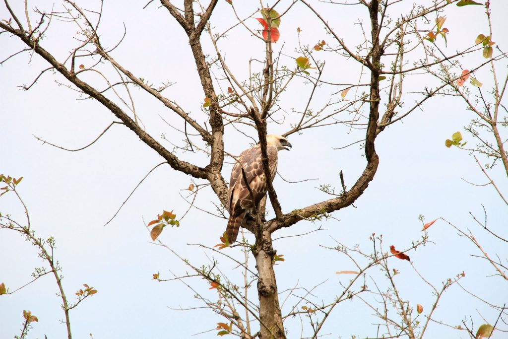 Safari au parc national de Chitwan