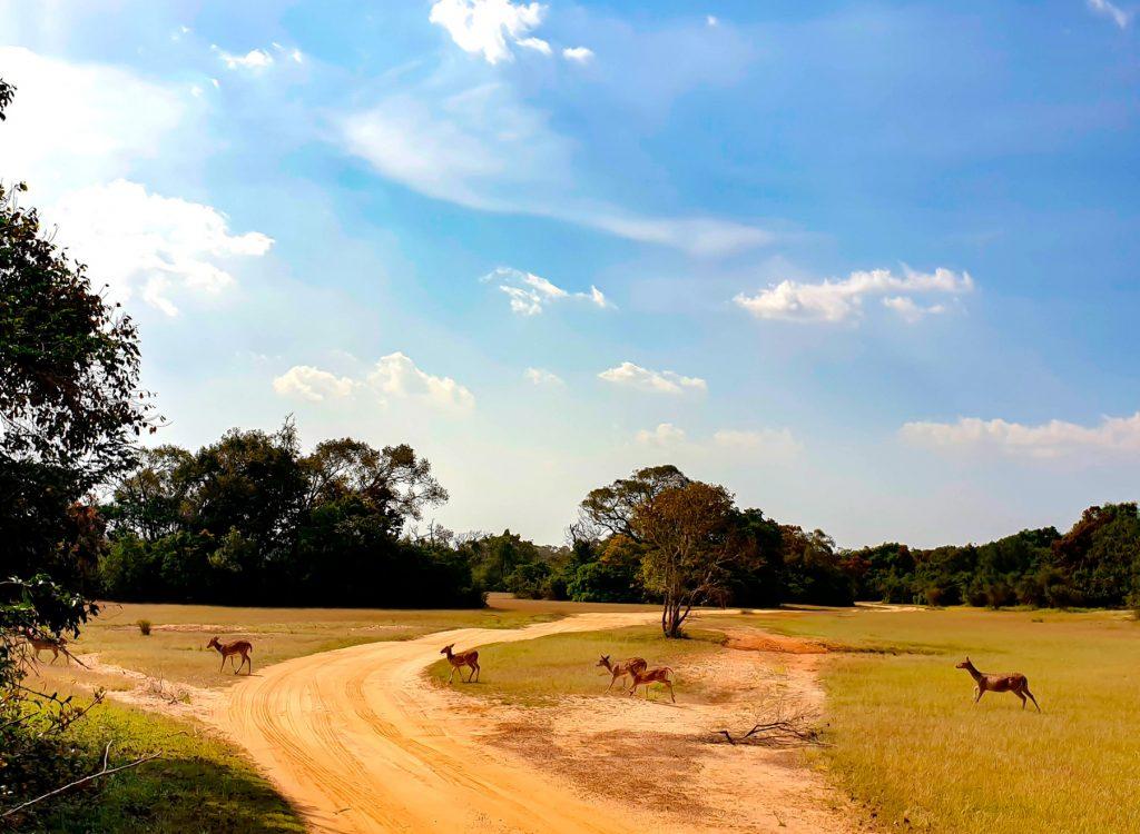Budget d'un voyage au Sri Lanka