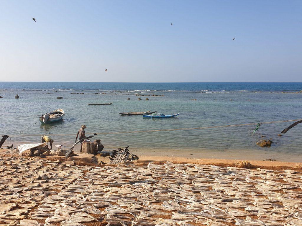 Jaffna péninsule sri lanka : bilan et budget
