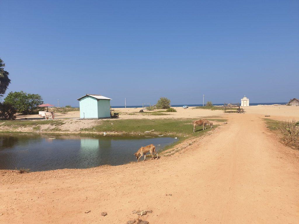 Péninsule de Jaffna, point Pedro