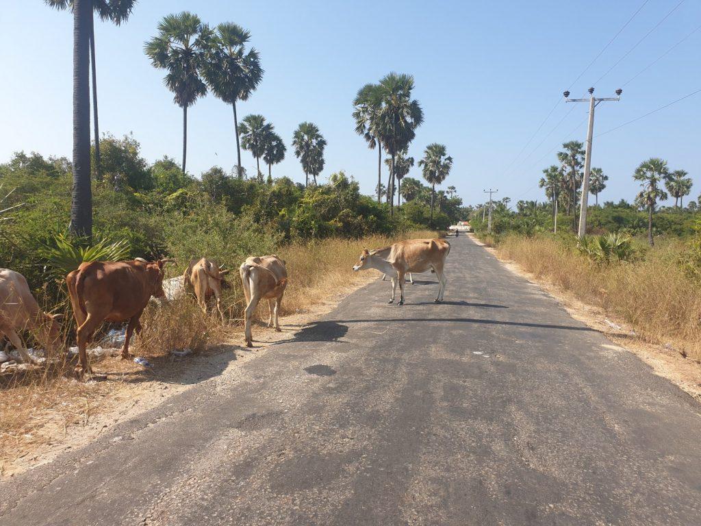 Découvrir la péninsule de Jaffna